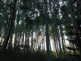 Rachel Watts Sharwell Trees