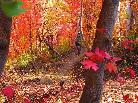 Fall Photo Rachel Sharwell
